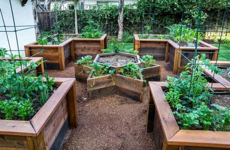 Poze Gradina legume - Gradinarit fara noroi sau dureri de spate
