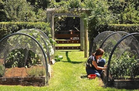 Poze Gradina legume - Relaxare activa in gradina de legume