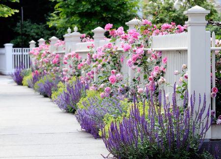 Poze Gradina de flori - gradina-shabby-chic.jpg
