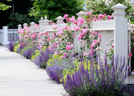 Poze Gradina de flori - Lavanda si trandafirii cataratori pentru o amenajare exterioara shabby-chic
