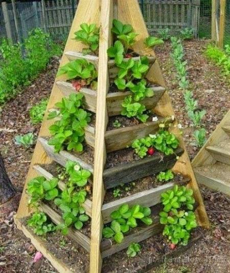 Poze Gradina legume - Cum poti cultiva capsune, plante aromatice sau plante decorative