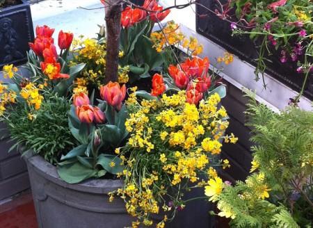 Poze Gradina de flori - Un coltisor superb cu flori de primavara