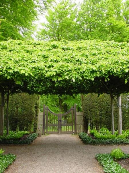Poze Gradina de flori - Hidcote Manor Garden