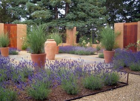 Poze Gradina de flori - Lavanda, atractia acestei gradini moderne minimaliste