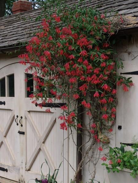 Poze Gradina de flori - Florile de culoarea coralului, puncte de atractie ale oricarei gradini