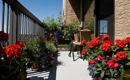 Poze Terasa - Flori superbe in gradina de pe balcon