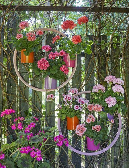 Poze Gradina de flori - muscate-roti-bicicleta-1.jpg