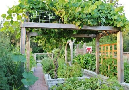 Poze Gradina legume - Pergola in gradina de legume