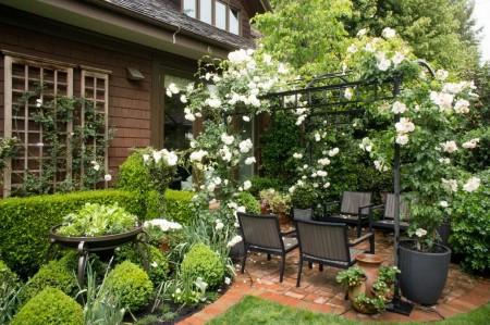 Poze Pergola - Plante agatatoare cu flori pe o pergola metalica