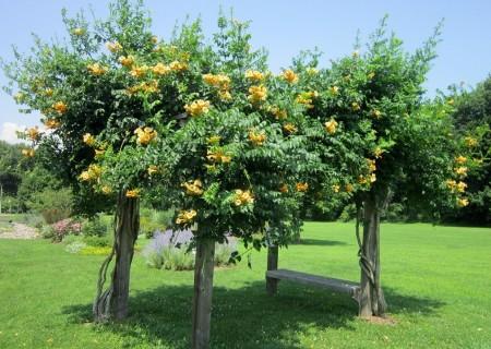 Poze Pergola - Relaxare in gradina la umbra unei pergole acoperita de flori