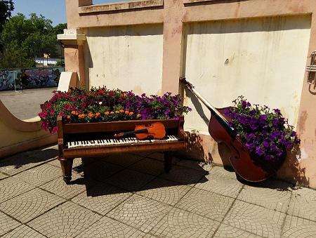 Poze Gradina de flori - Instrumente muzicale scoase din uz, pline cu flori