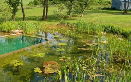 Poze Cascada si iaz - Iazul de gradina poate asigura filtrarea si purificarea apei din piscina