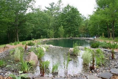 Poze Piscina - Piscina naturala vazuta dinspre zona de filtrare si purificare a apei