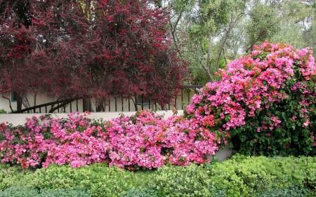 Poze Gradina de flori - Explozie de parfum si culoare in gradina