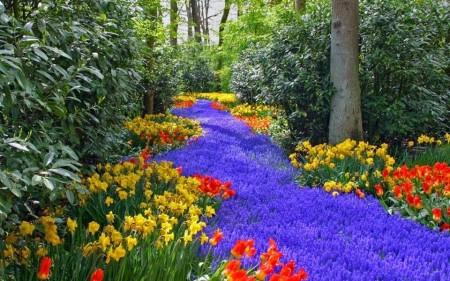 Poze Gradina de flori - Raul de flori