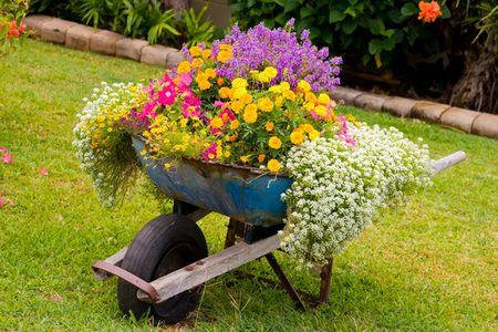 Poze Gradina de flori - roaba-ghiveci-flori-gradina.jpg