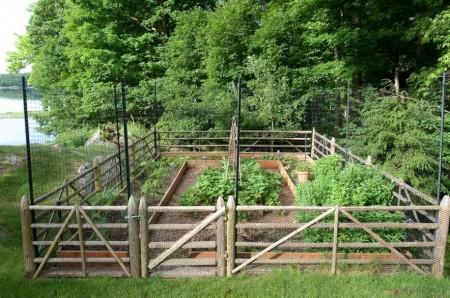 Poze Gradina legume - Mica gradina de legume