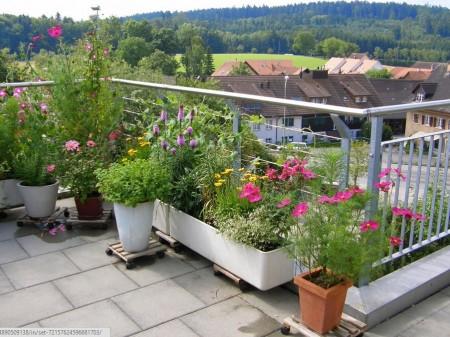 Poze Terasa - Gradina cu flori amenajata pe balcon