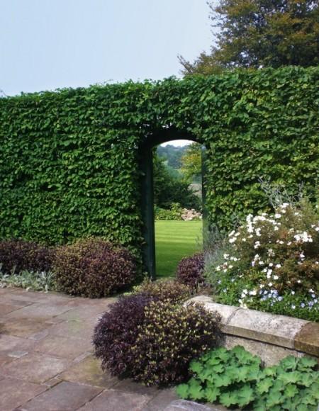 Poze Garduri si porti - Gard viu din plante cataratoare