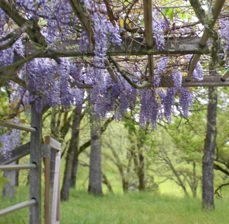 Poze Gradina de flori - Plante agatatoare cu flori