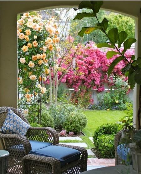 Poze Gradina de flori - Plantele cataratoare cu flori dau volum, culoare si parfum oricarei gradini