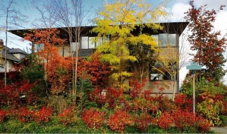 Poze Gradina de flori - Culori de toamna in gradina