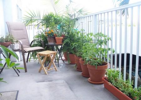 Poze Terasa - Gradina pe balcon cu plante decorative, legume si verdeturi
