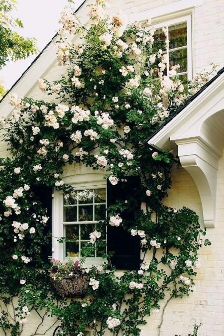 Poze Fatade - Armonie cromatica intre trandafiri si fatada din caramida