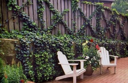 Poze Garduri si porti - Gard personalizat prin decorarea cu iedera
