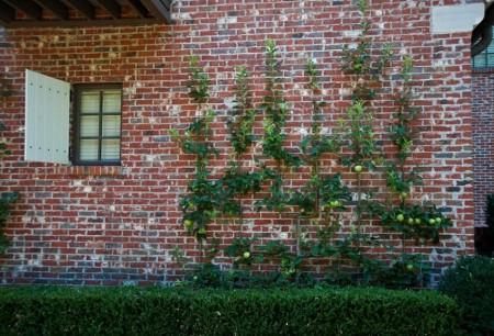 Poze Gradina legume - Imbinati placutul cu utilul in gradina