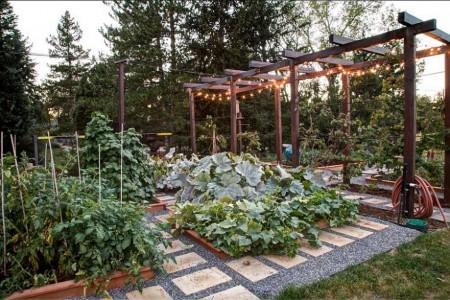Poze Gradina legume - Gradina de legume, oaza de relaxare
