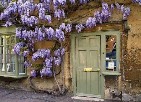 Poze Gradina de flori - Fatada decorata cu wisteria inflorita