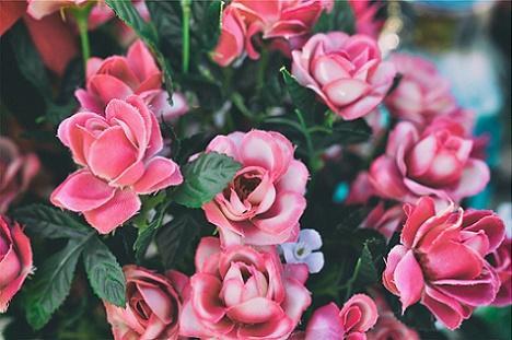 Alege cel mai potrivit atomizor Stihl pentru stropirea trandafirilor