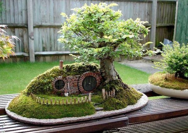Arta cresterii si ingrijirii bonsaiului