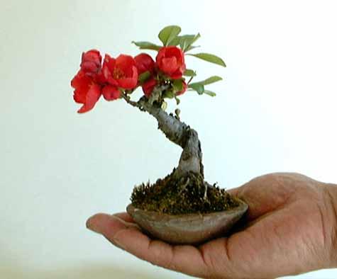 Лана, Богомол просто классный.  А я покажу вам два новых бисерных деревца и их живые прототипы.