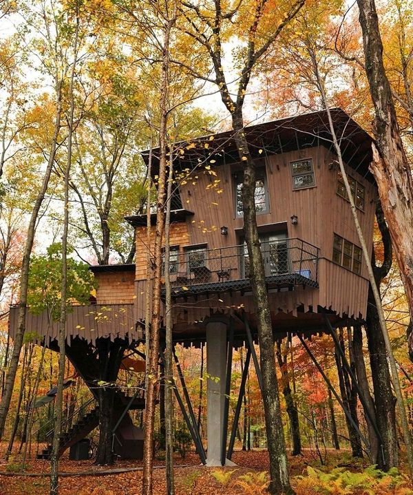 Casa lemn in copaci