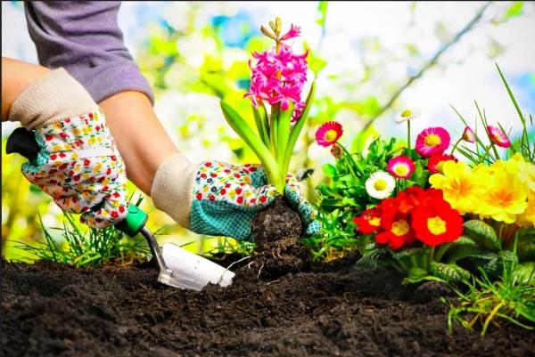 Ponturi pentru cultivarea plantelor de gradina: cum le stimulezi cresterea cu produse naturale