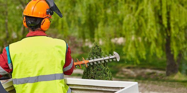 Sfaturi practice pentru gradina ta