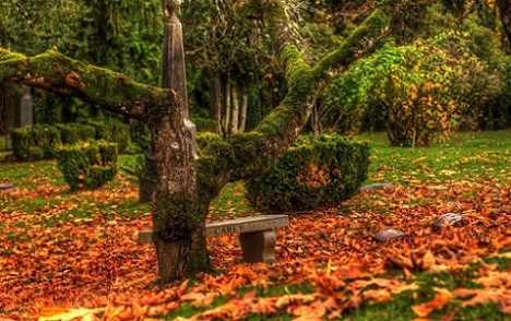 Calendarul gradinarului: luna noiembrie
