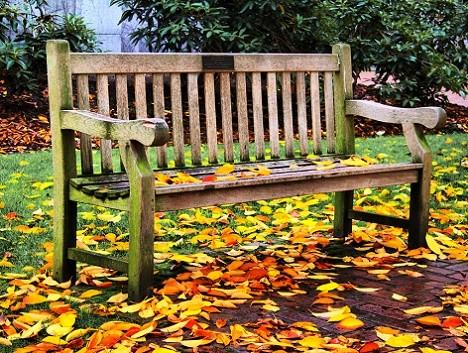 Calendarul gradinarului: luna octombrie