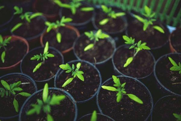 Descopera un truc uimitor care te ajuta sa obtii cel mai bun ingrasamant natural pentru plantele tale!
