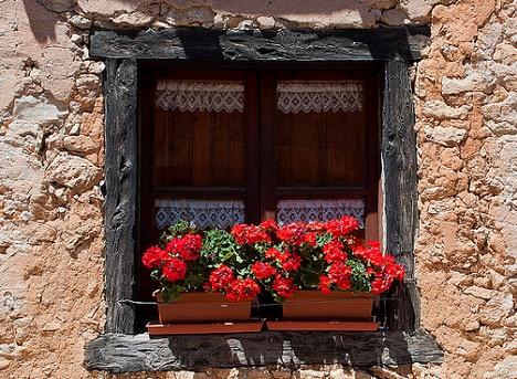 Cum ingrijesti muscatele, cele mai indragite plante pentru balcon si terasa