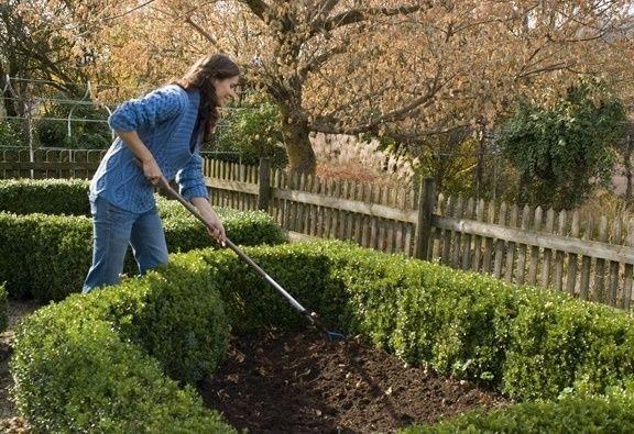 Inceputul perioadei de plantare pentru arbori si arbusti