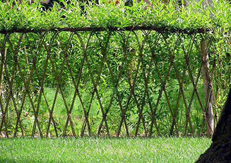 Ce Trebuie Sa Stii Despre Constructia Unui Gard Viu