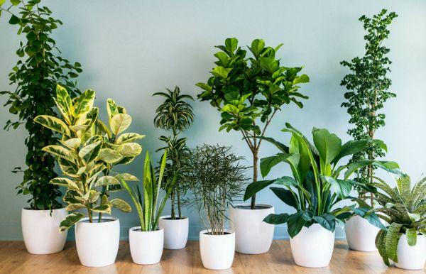 5 plante de interior care aproape ca nu necesita ingrijire