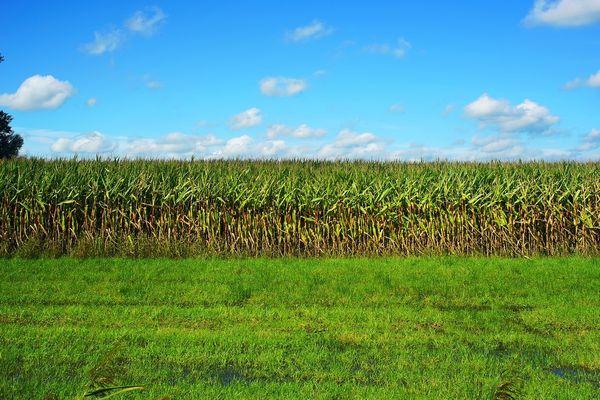 Seminte de plante furajere pentru agricultura