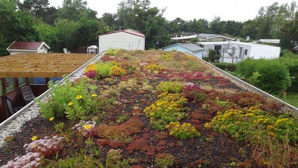 In secolul 21, acoperisurile verzi devin o solutie accesibila si inovatoare pentru imbunatatirea calitatii vietii