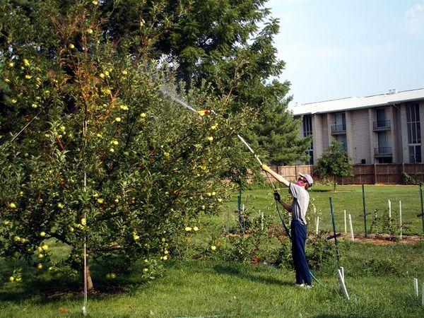 Stropirea pomilor fructiferi cu produse eficiente de la Pesticide-AZ - Livezi sanatoase si bogate