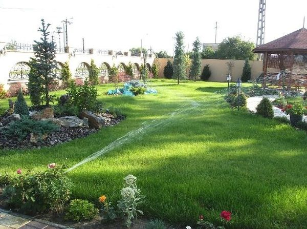 Amenajarea unei peluze - insamantare iarba sau montare rulouri de gazon?