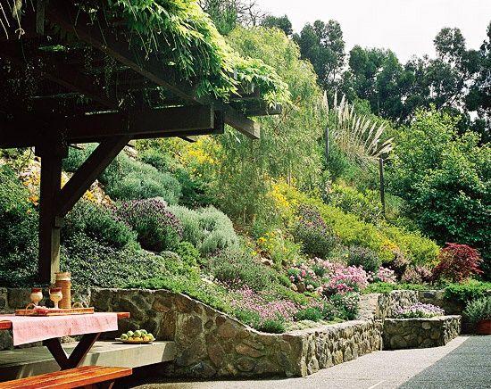 Vegetatie bogata gradina panta